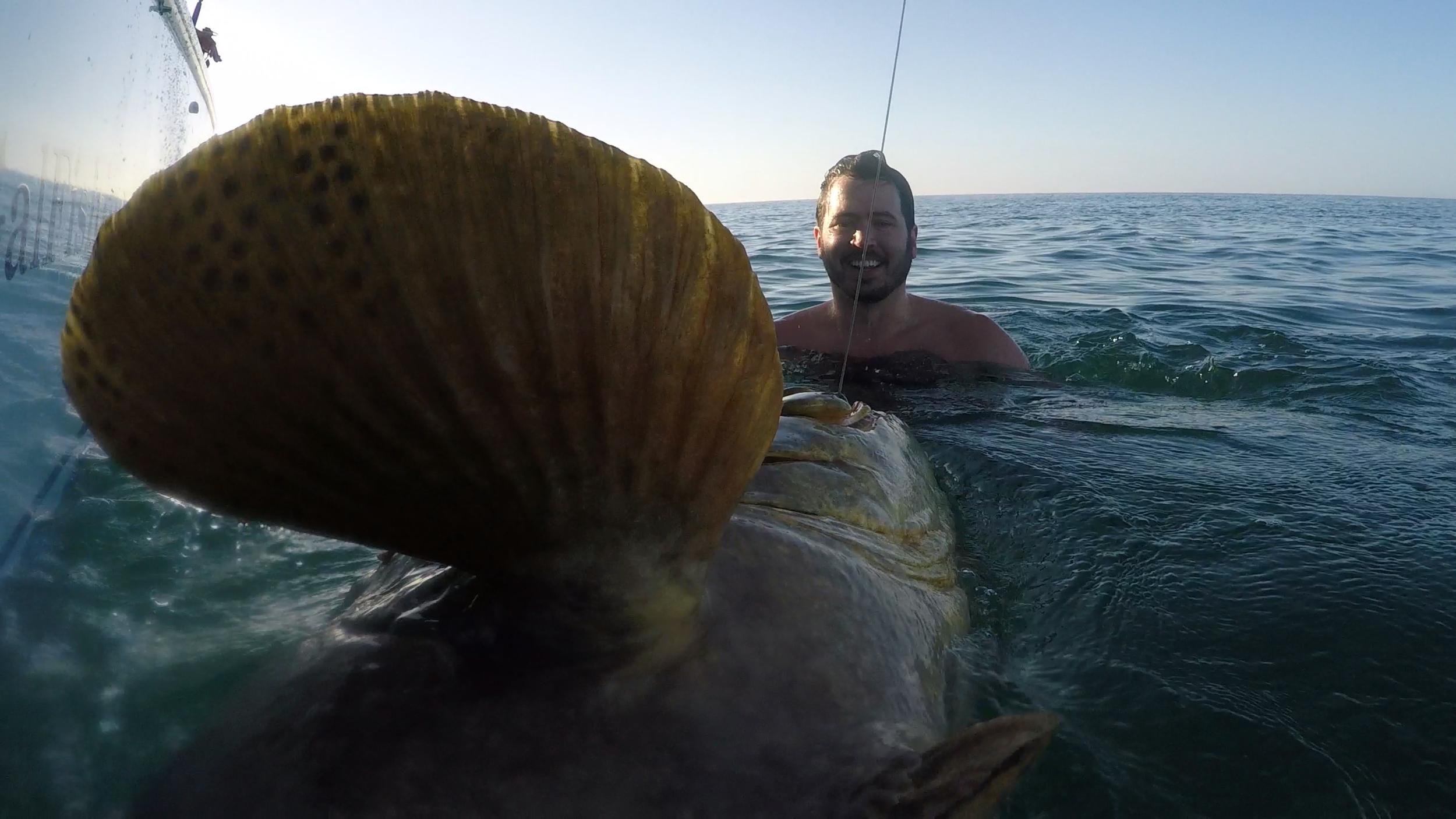 Goliath Grouper-Naples-Florida-Bonita-Estero-Fort Myers-Fort Myers Beach-Fishing-Charter-Charters-Best Fishing