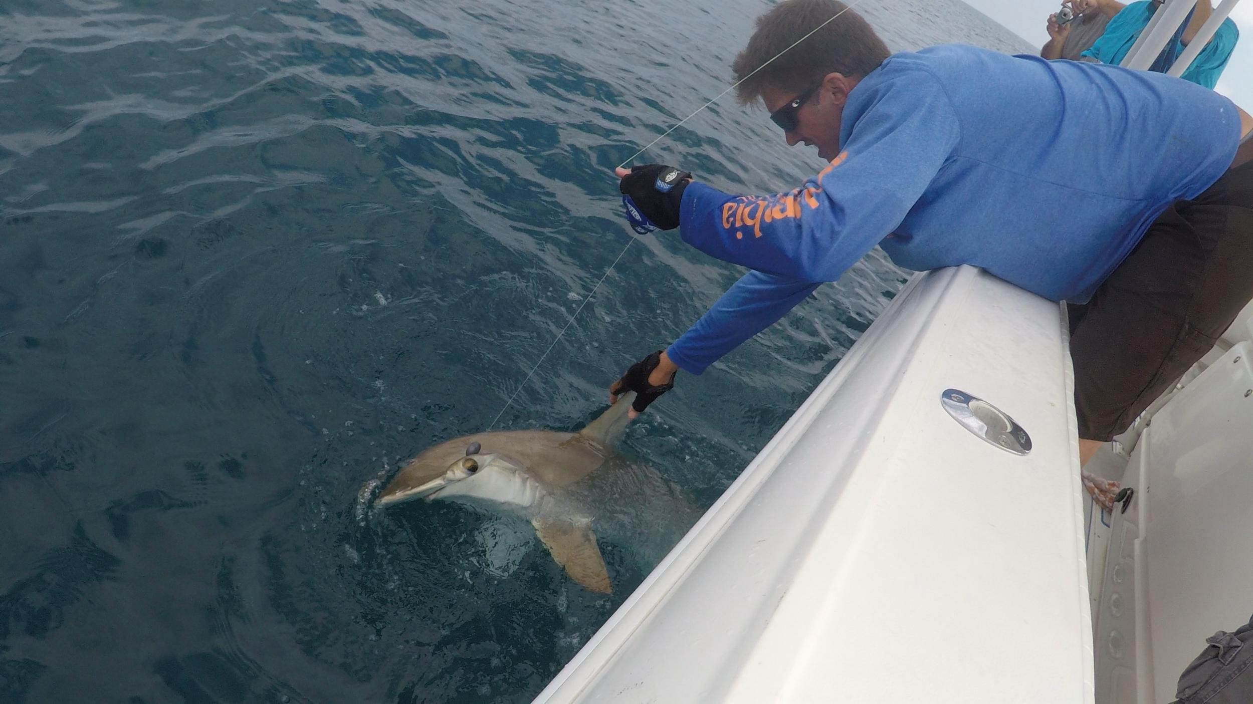 Shark-Fishing-Naples-Florida-Charter