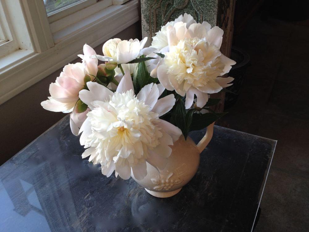 Bluebird Gardens white peonies in white vase.