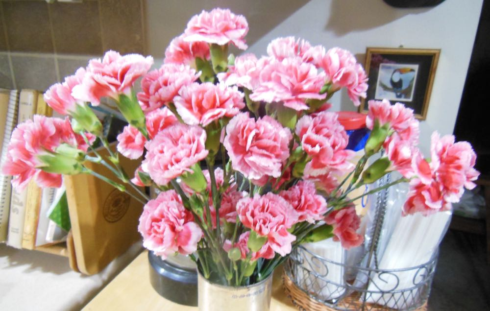 Pretty bouquet of pink carnations brightening up my kitchen for my January birthday.
