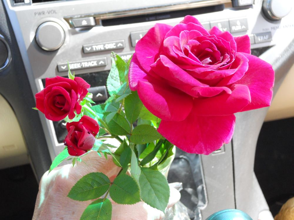 A little bouquet of red roses on its way to a friend's business.