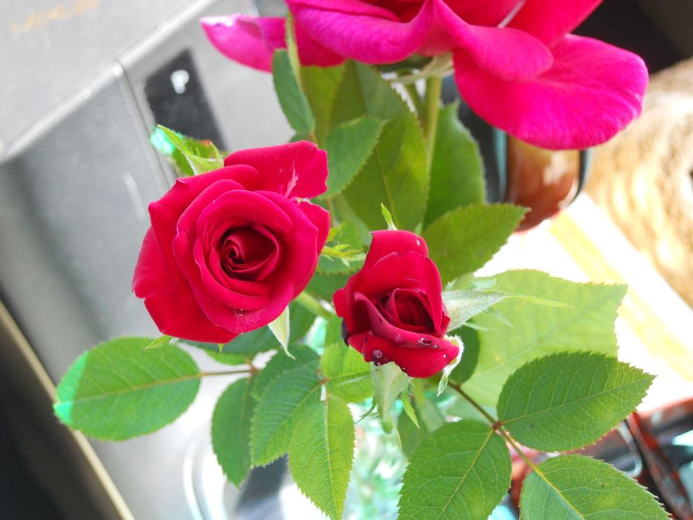 Pairing miniature roses with a hybrid tea rose is a simple way to make a pretty bouquet.