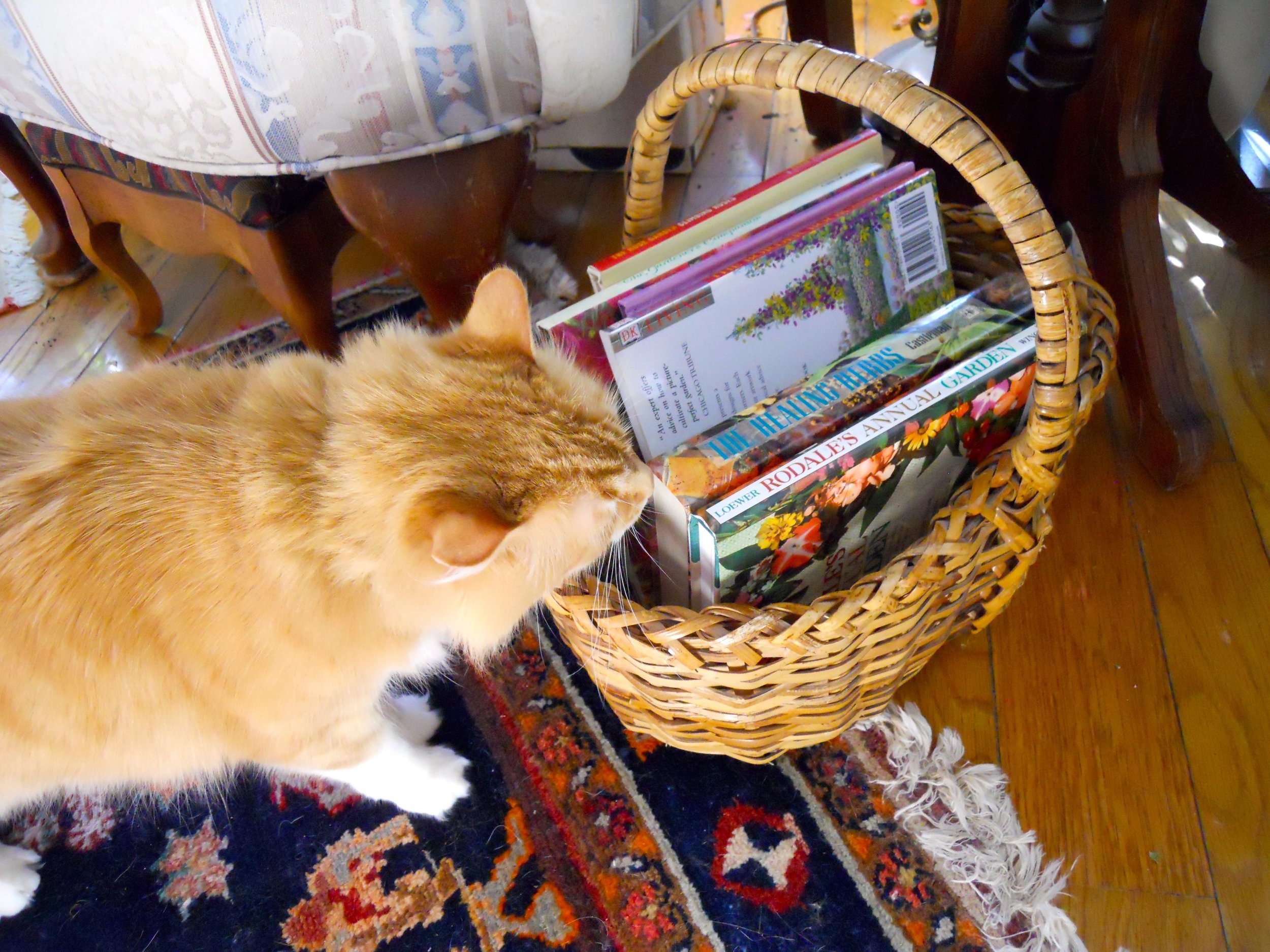 Shirley Honey seems to be checking my reading options in this basket.