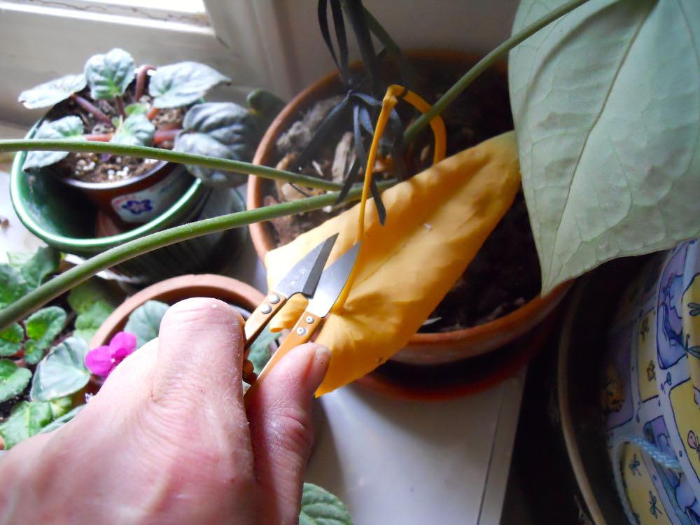 Use a separate set of thread snips to easily trim leaves and dead flowers off plants.