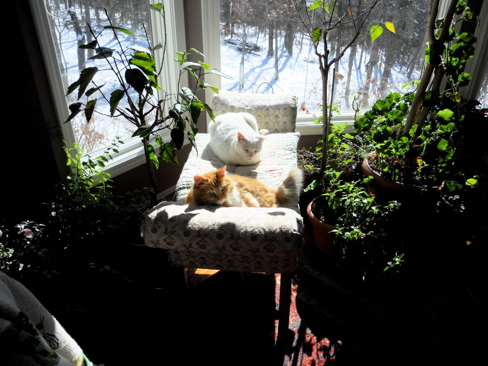 Cats also enjoy reading nooks, especially the napping part of comfortable sunny reading nooks.