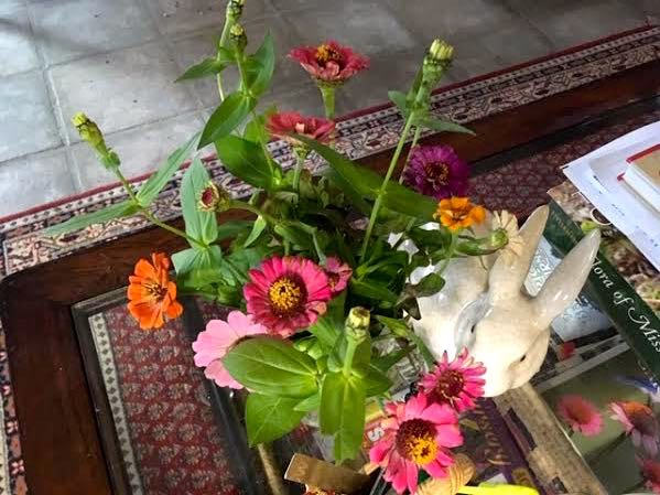 My last zinnia bouquet keeping me company on my den coffee table. (Photo by Charlotte Ekker Wiggins)