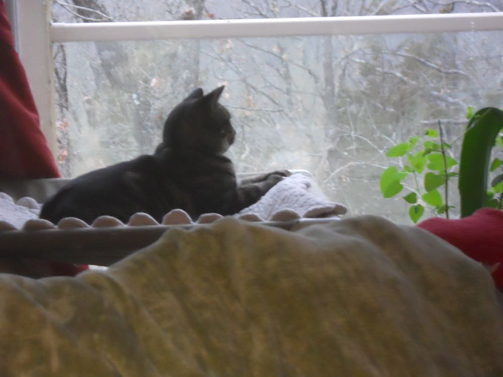 One minute cat bed, the next a cat perch. (Photo by Charlotte Ekker Wiggins)