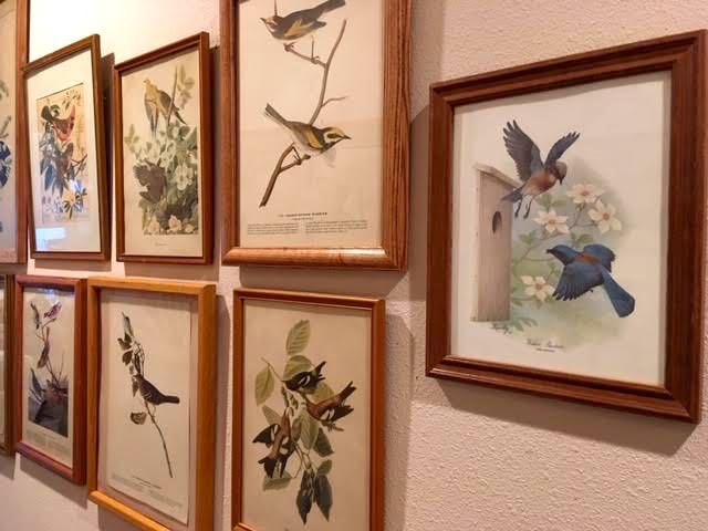 Some of my vintage bird prints along a hallway. (Photo by Charlotte Ekker Wiggins)