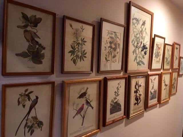 The row of bird prints guiding me down my hallway. (Photo by Charlotte Ekker Wiggins)