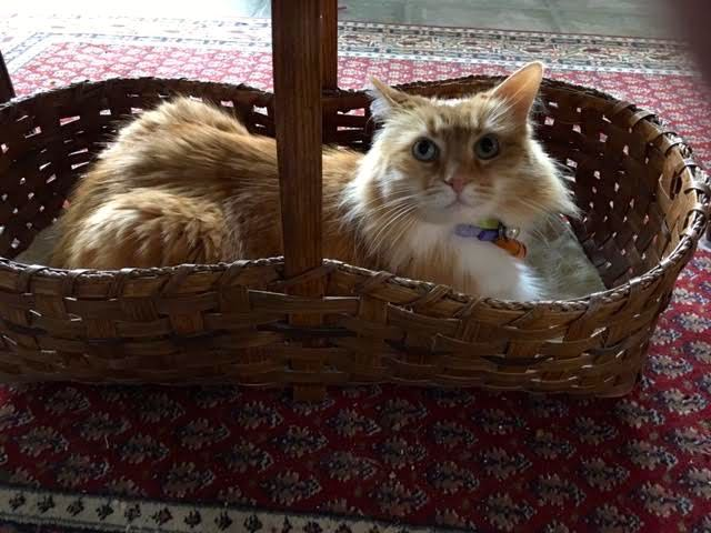 Shirley Honey had different plans for my magazine storage basket. (Photo by Charlotte Ekker Wiggins)