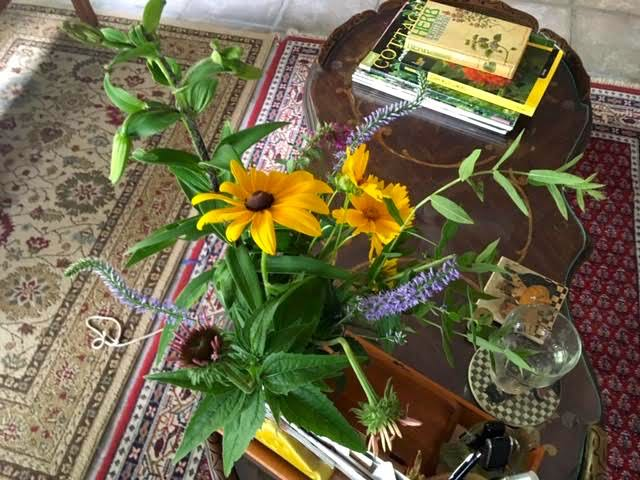 These are Missouri wildflowers cut from starts I am planting. (Photo by Charlotte Ekker Wiggins)