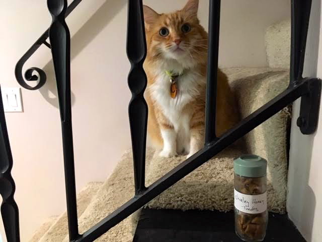 Repurposed spice jars hold precious items such as favorite cat treats. (Photo by Charlotte Ekker Wiggins)