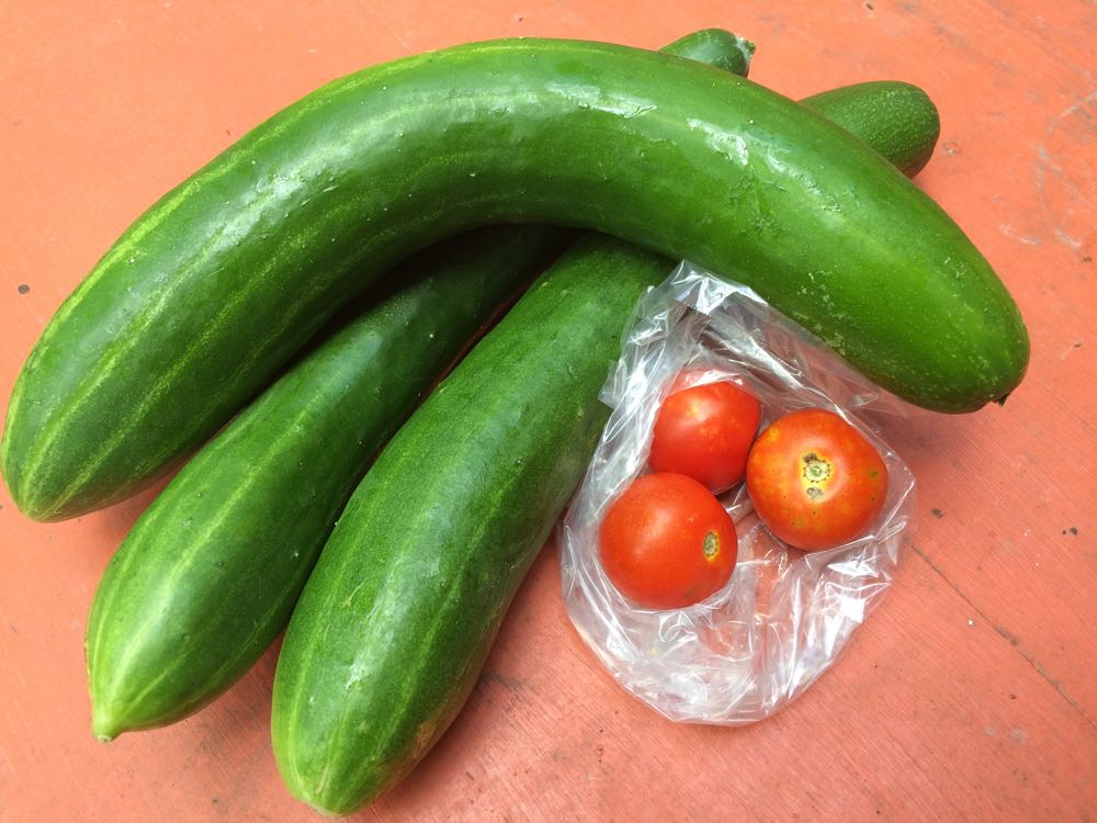 Cucumbers and cherry tomatoes from a beekeeping student's garden.