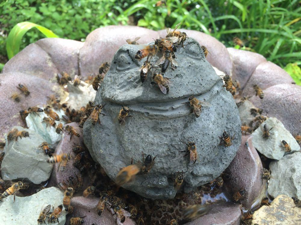 Concrete frog in my flower-shaped birdbath seems to be enjoying the company!