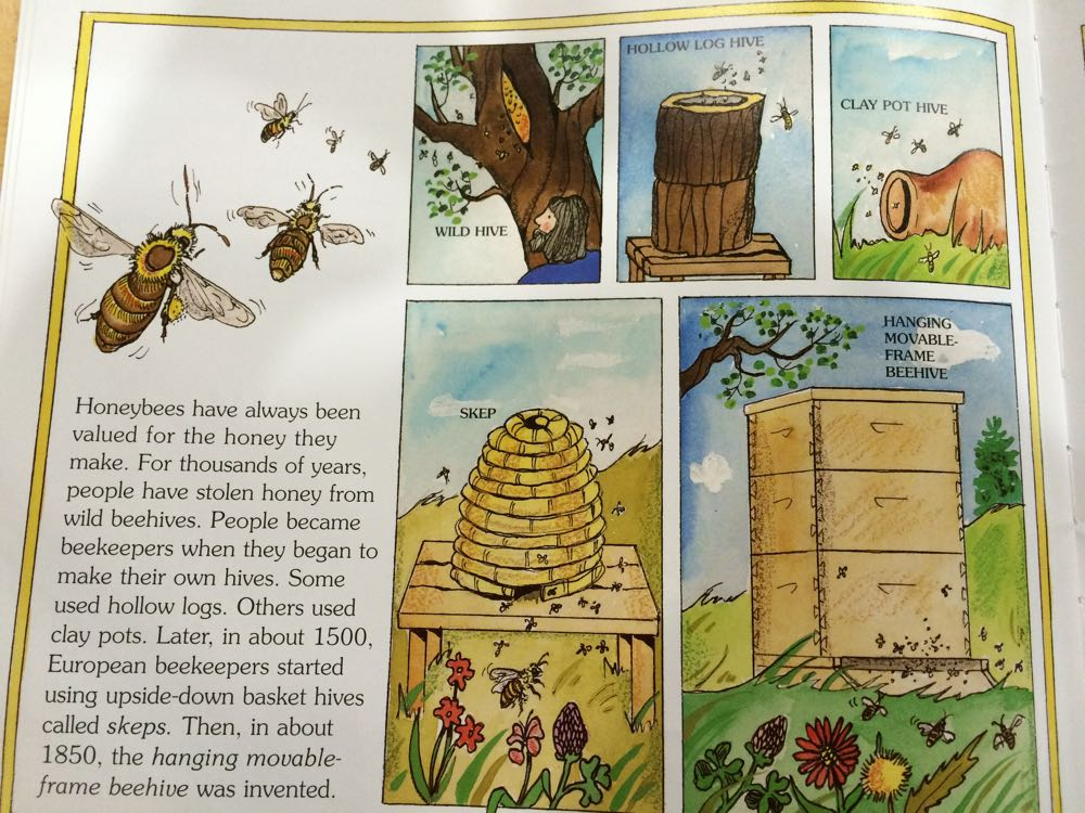 "One of the pages in Gail Gibbons ""The Honey Makers"" showing the various bee homes."