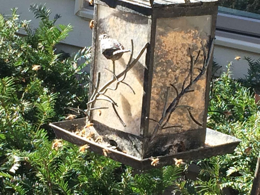 My honeybees checking a bird feeder for pollen.