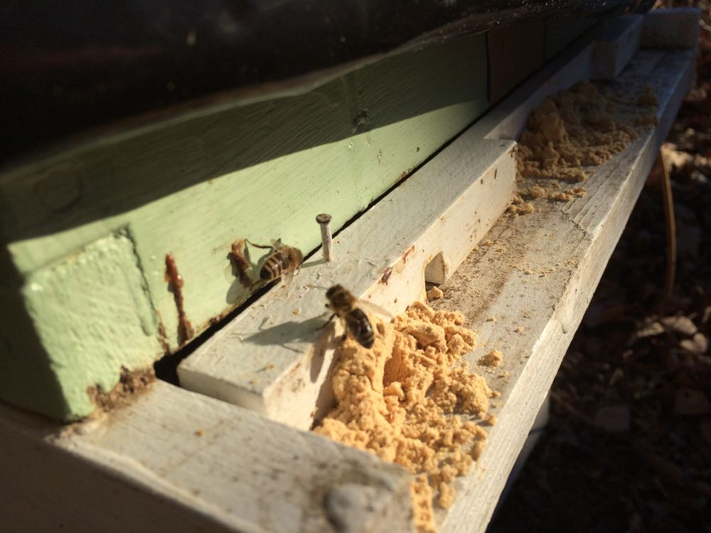 Pollen substitute at the front of one of my hives.