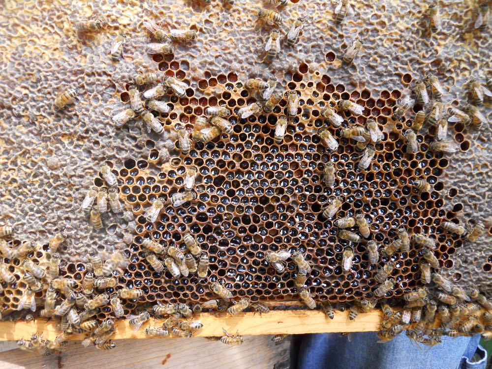 Usually the queen would lay eggs in the center spot of this brood frame now filled with nectar.