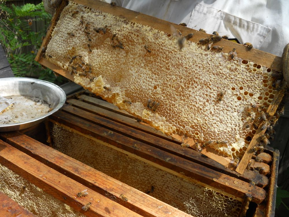 Top boxes of hives this time of year are full of frames with capped honey.