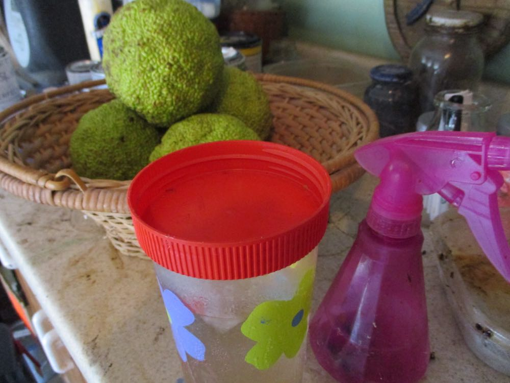 When I have something I want to save, like earrings or plant seeds, I turn the jar lid over.