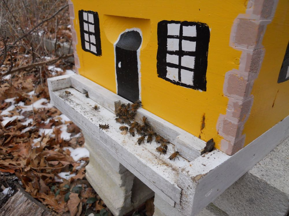 The few bees that flew out of the top were quickly going back in through the bottom entrance.