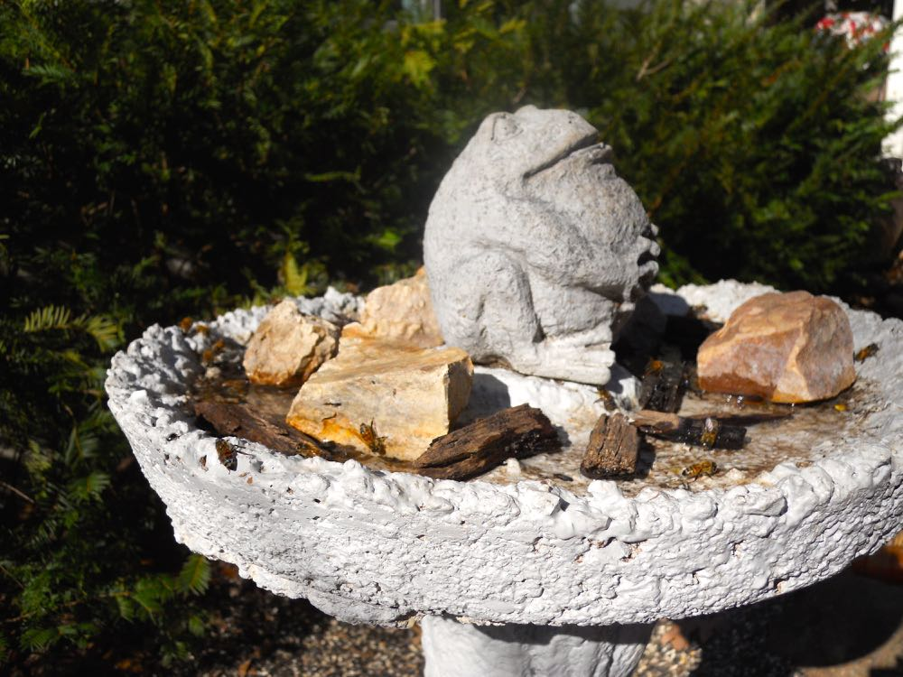 This old bird bath has been repurposed into a bee bar in the front of my Missouri garden.