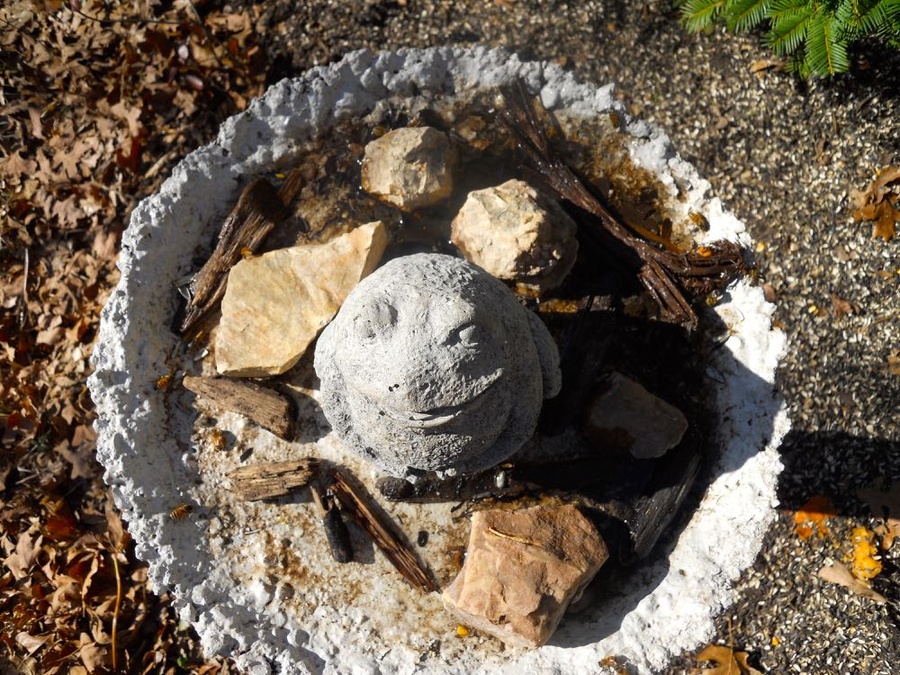My repurposed old bird bath from the birds eye view looking down on the concrete frog.