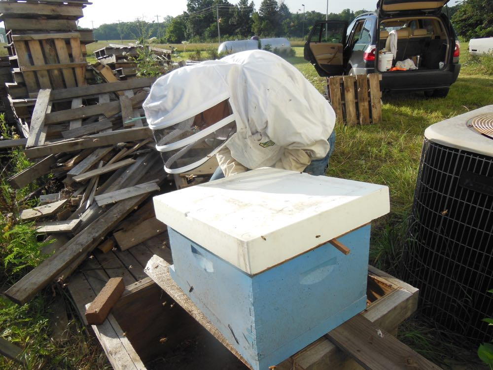 David sets an empty hive with a queen in a clip inside to attract bees to the new home.