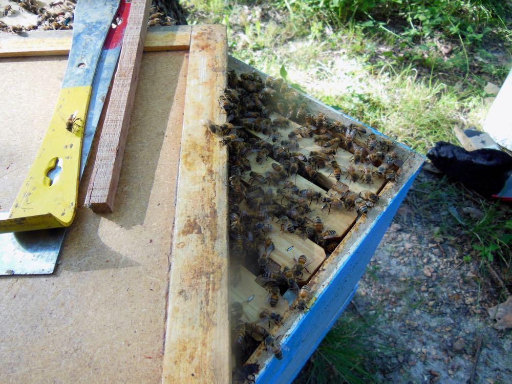 Bees in woodpile in new home hive corner.jpg