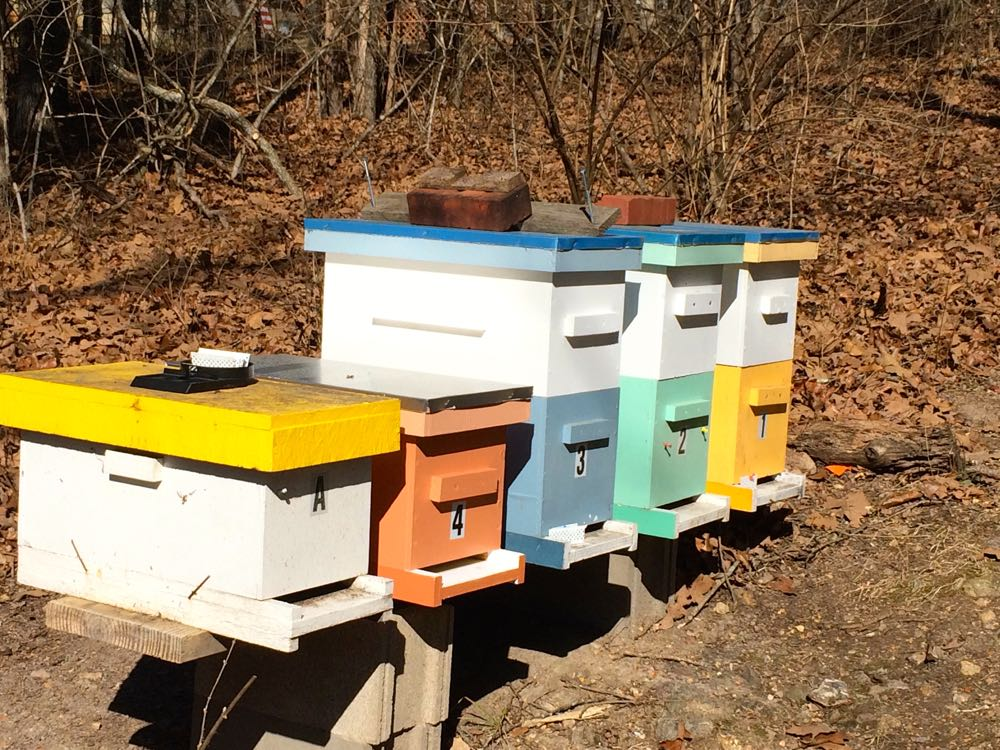 For his nucs, David has numbered and labelled each one as well as given them different colors.