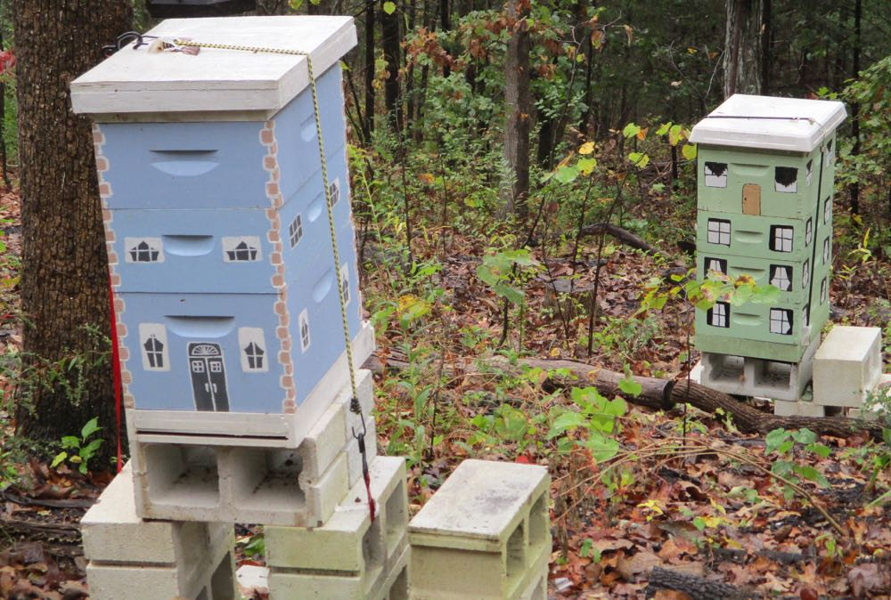 My 8-frame blue hive and my first grey, now repainted green 10-frame hive in my garden.
