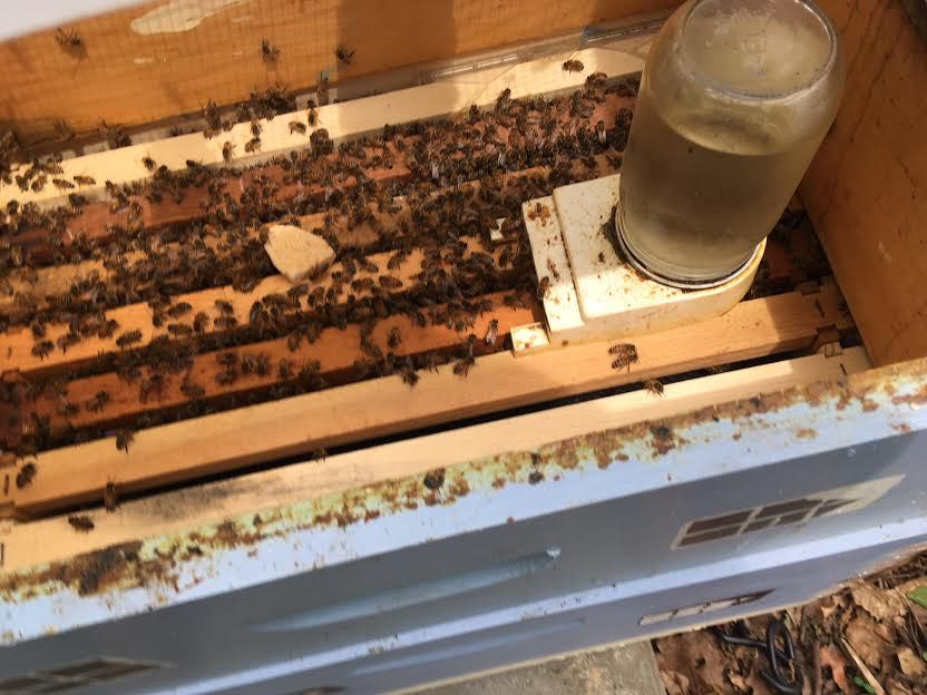 Inside an 8-frame hive body with a newly-installed swarm. When will they need more room? (Photo by Charlotte Ekker Wiggins)