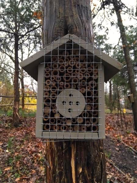 Several bees have settled into this native bee house in my garden. (Photo by Charlotte Ekker Wiggins)