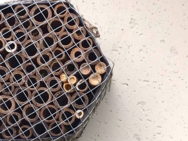 See the new bees on the right ready to hatch? (Photo by Charlotte Ekker Wiggins)
