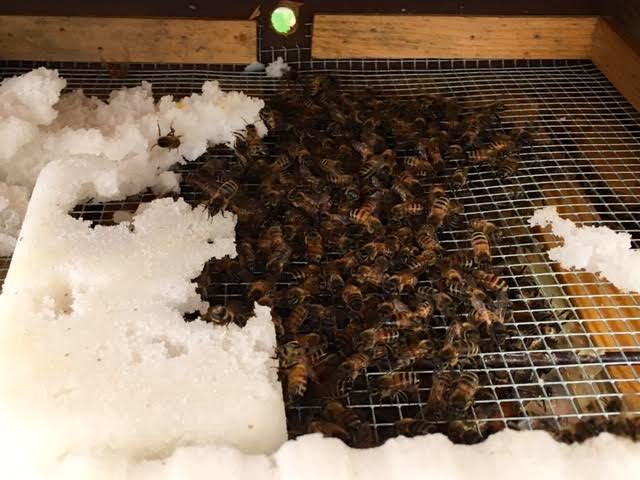 One of my honeybee colonies at the top of their hive on a rainy Missouri day. (Photo by Charlotte Ekker Wiggins)