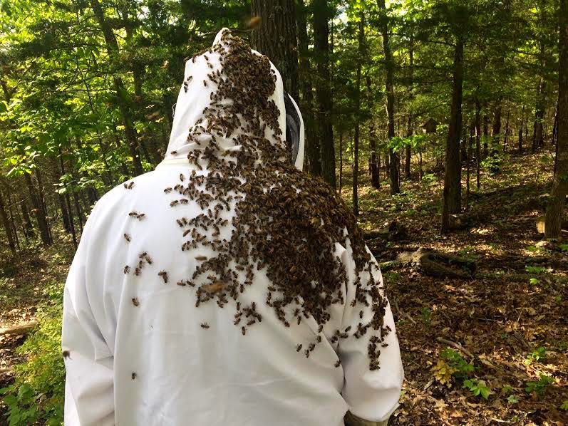 The back of my bee buddy after checking a hive. (Photo by Charlotte Ekker Wiggins)