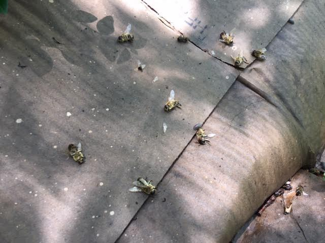 Poor little drones were killed and kicked out of the hive. (Photo by Charlotte Ekker Wiggins)