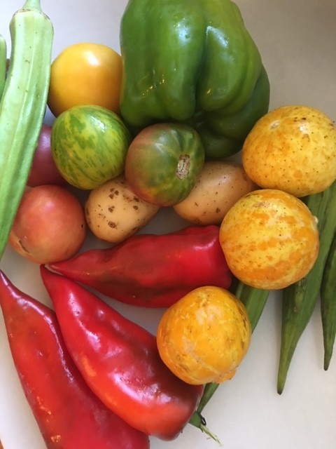 Okra veggies.JPG