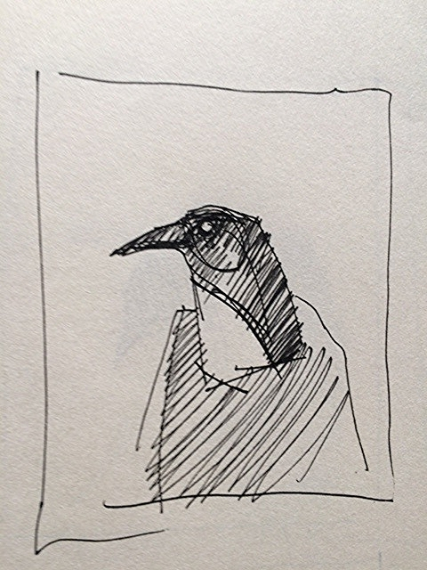 Crow Sketch 1