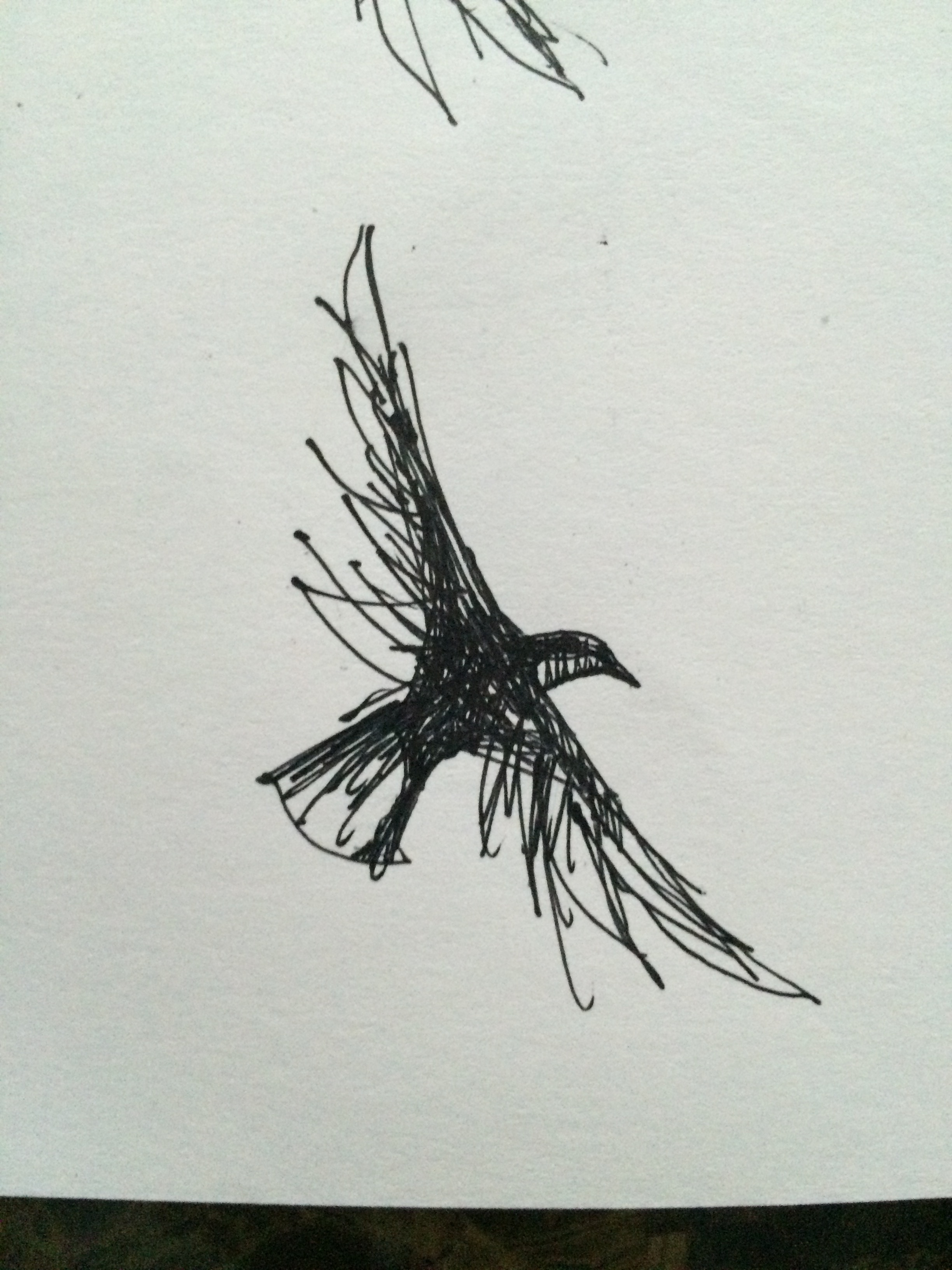 Crow Fly