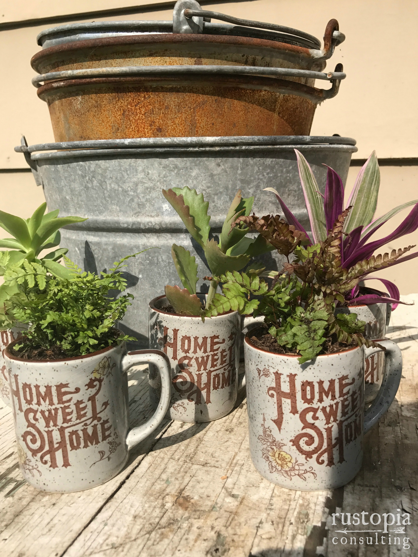 Three Home Sweet Home mugs as planters for mini plants. || RustopiaConsulting.com
