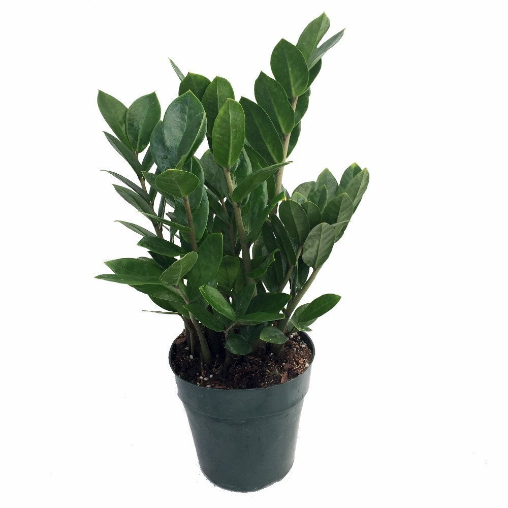 Top-5-Easy-to-Care-for-House-Plants-2