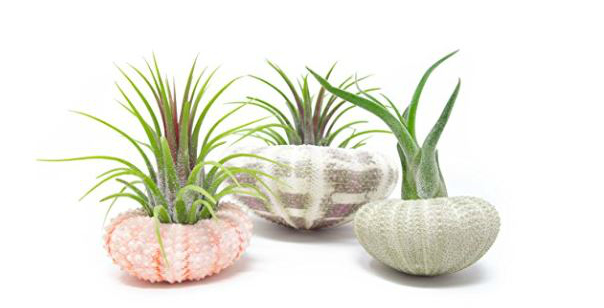 Top-5-Easy-to-Care-for-House-Plants-6