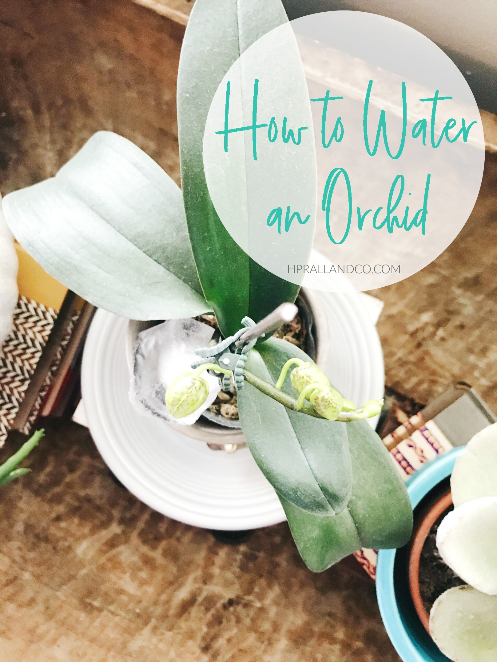 How to Water an Orchid from hprallandco.com