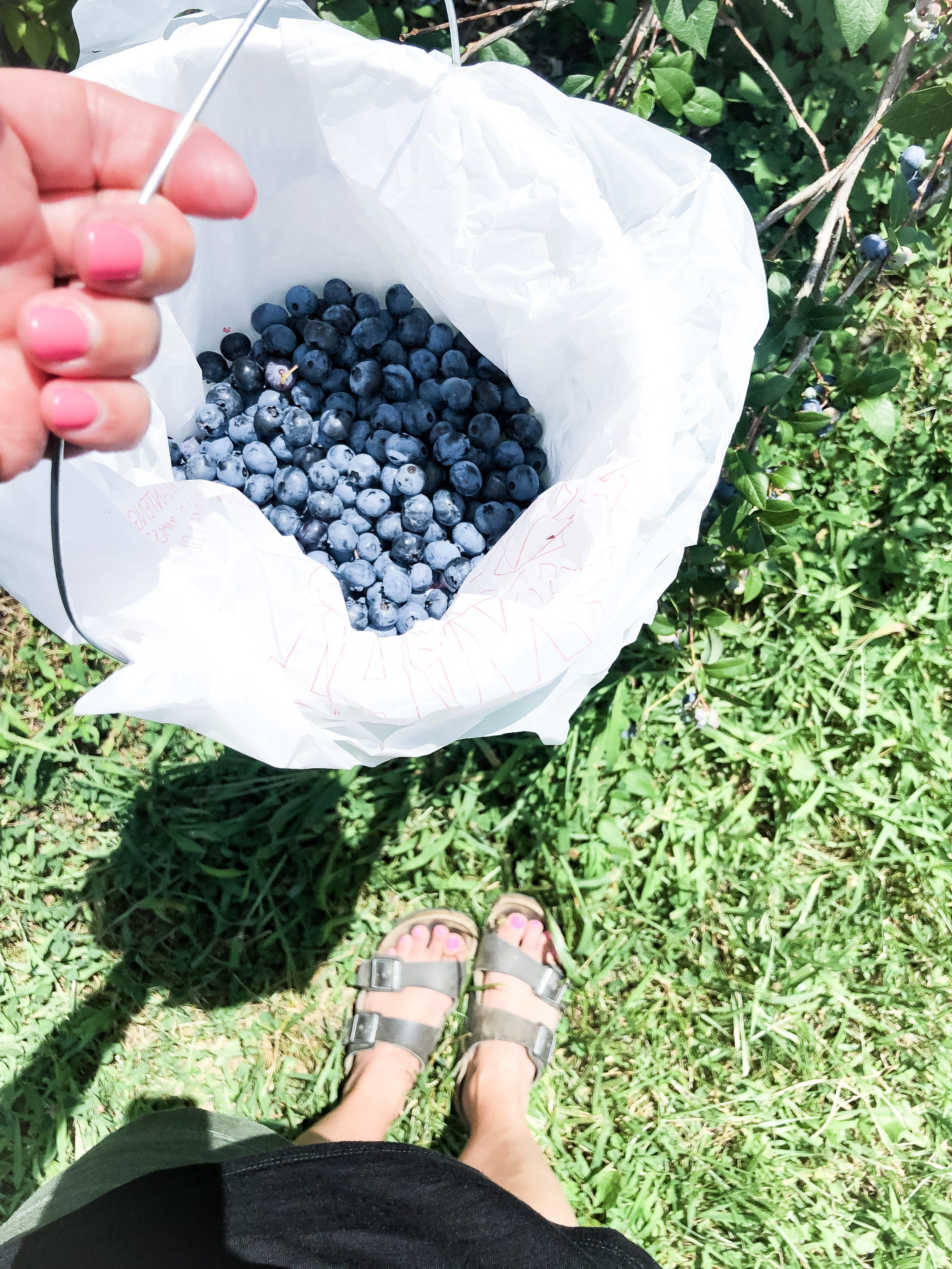 It was hot out the day we picked berries, so I didn't get as many as I'd hoped. It was still enough to make this delicious blueberry crisp recipe.