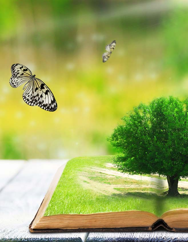 Tree-and-butterfly