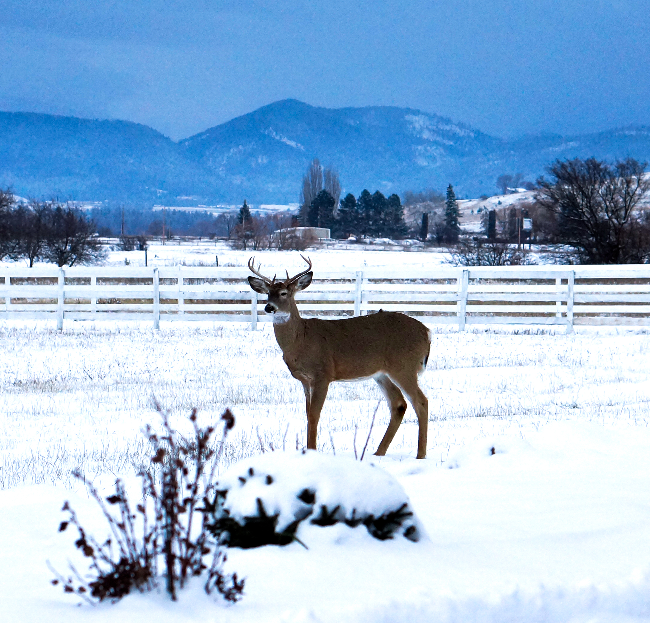 An often-overlooked planning consideration in Montana: some guests will always show up unannounced.