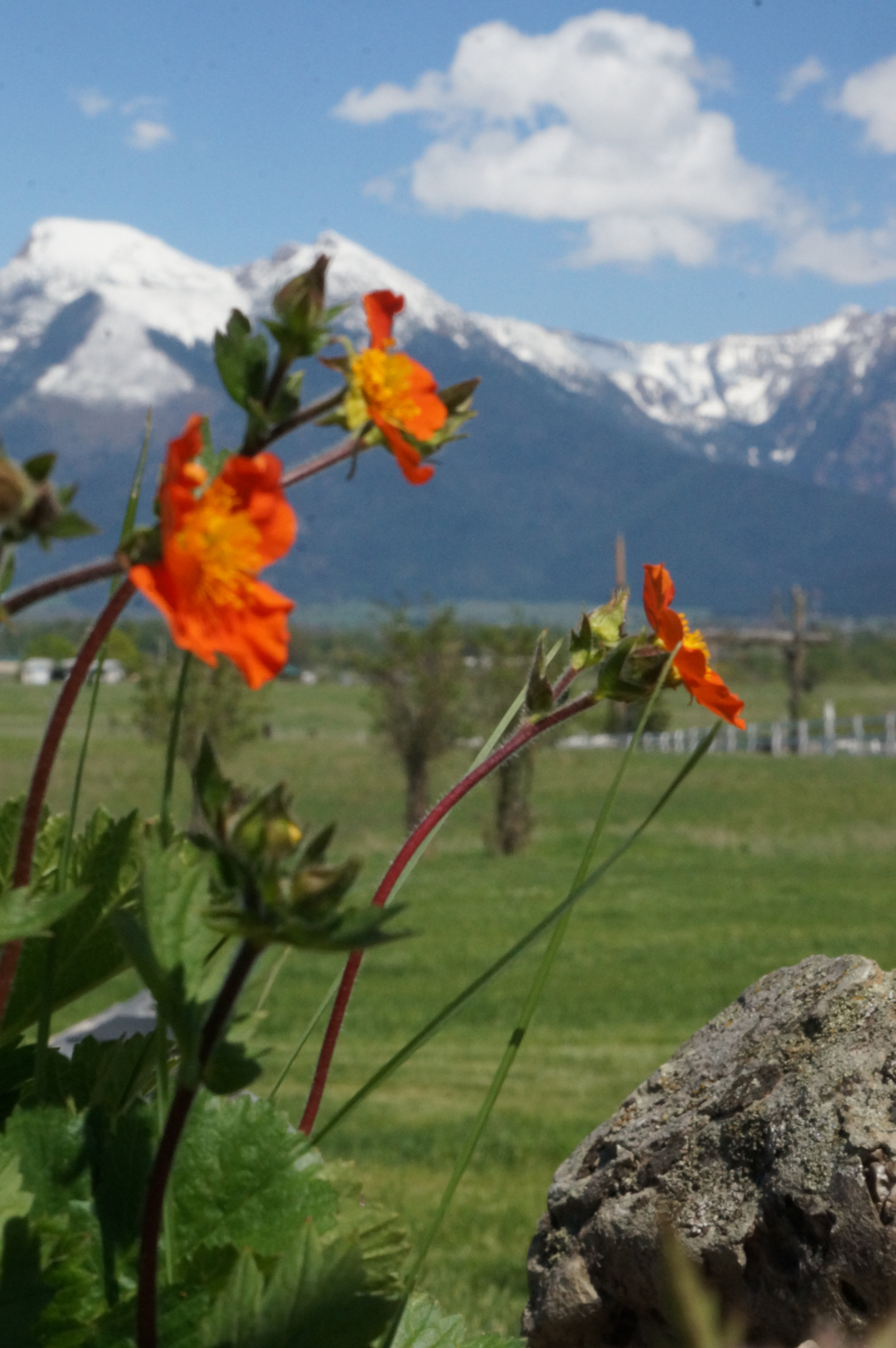 Spring Flowers in Bloom at Rugged Horizon
