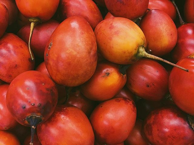 Tomate de arbol (AKA: Tree tomato!) 🍅🍅🍅They look like a tomato inside but have a bitter sweetness I can't quite get into...but blend them into a juice and I'm SOLD. #thehealthycamper