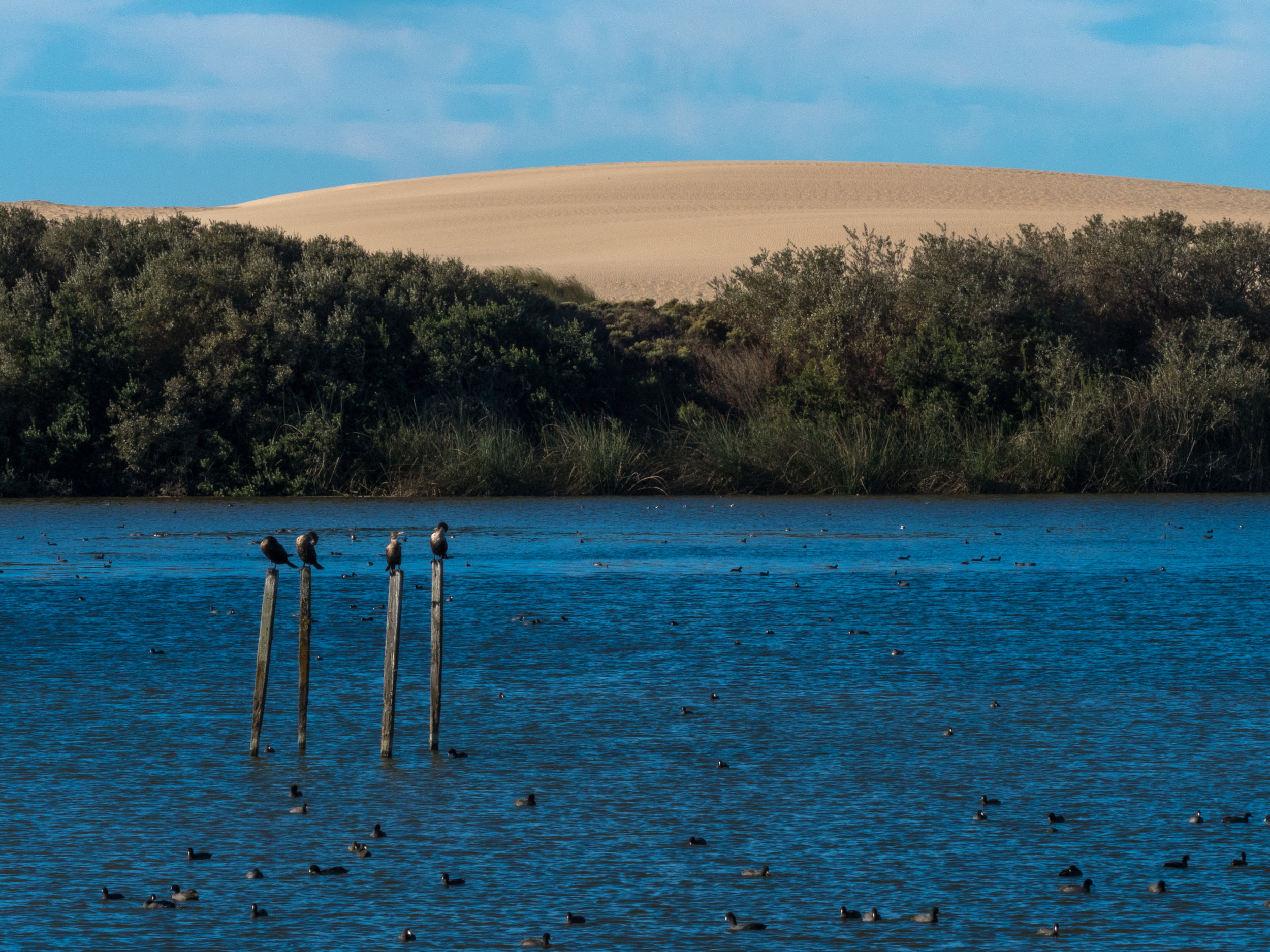 Cormorants, the lake and the dunes at Oso Flaco